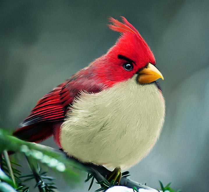 Angrybirds - rosso