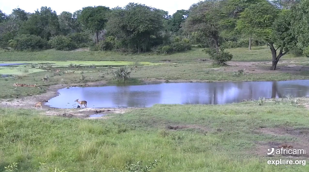 Africam Tembe Elephant Park - Webcam dal vivo