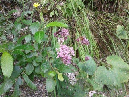 Farfalla su fiore rosa tra la vegetazione