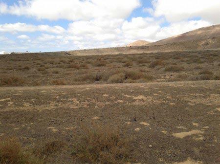Terreno roccioso con ciuffi d'erba gialla