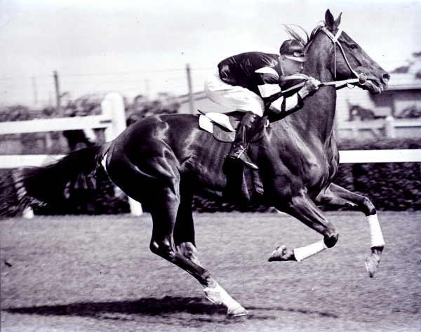 Foto del cavallo Phar Lap in corsa