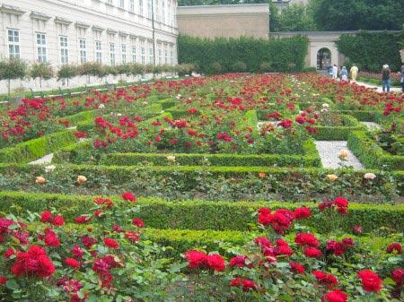 Il viale di rose dei Giardini Mirabell