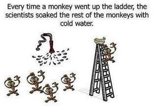 Esperimento delle scimmie di G. R. Stephenson 02