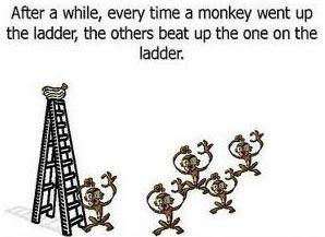 Esperimento delle scimmie di G. R. Stephenson 03