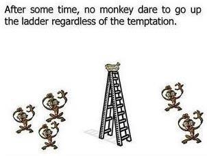 Esperimento delle scimmie di G. R. Stephenson 04