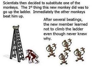 Esperimento delle scimmie di G. R. Stephenson 05