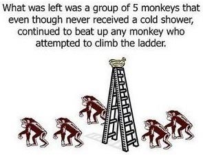 Esperimento delle scimmie di G. R. Stephenson 07