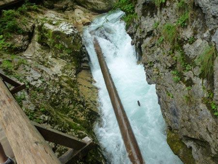 Slovenia - Gola di Vintgar - albero caduto