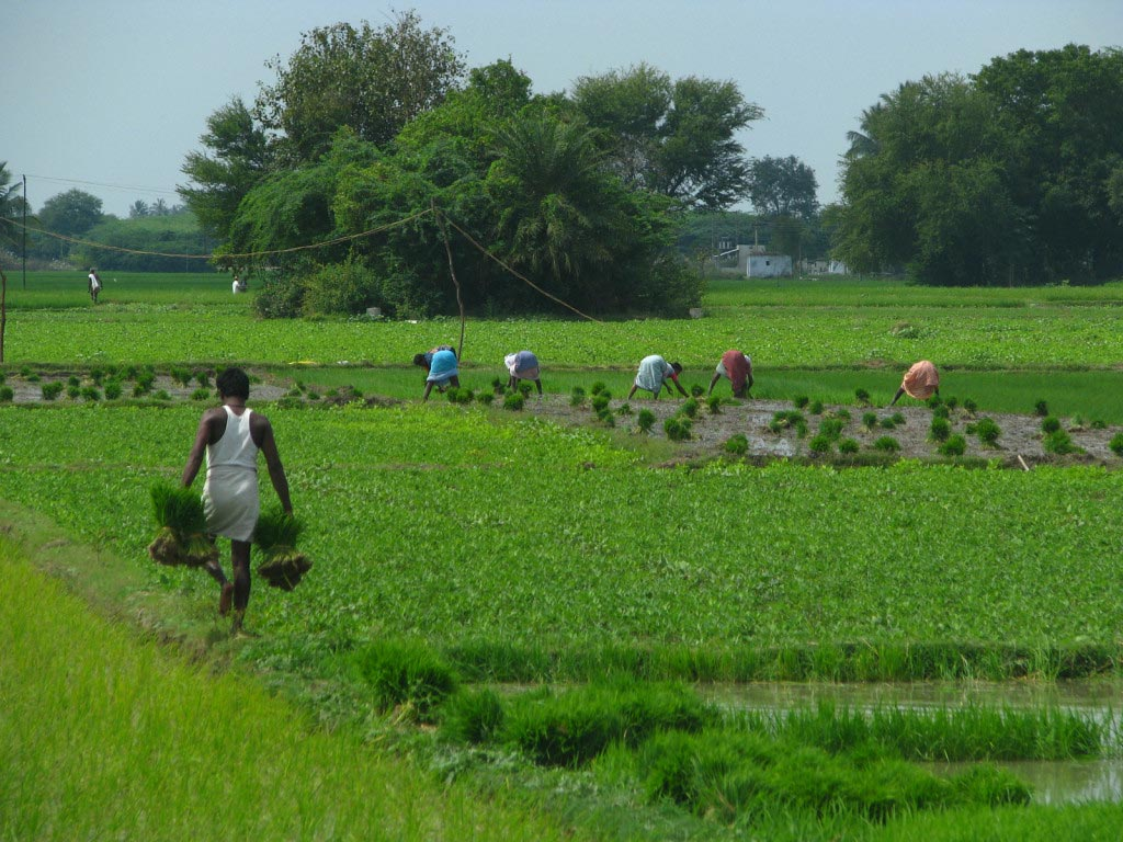Agricoltura in India