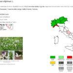 Portale della Flora di Italia - Astralagus alpinus